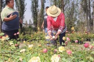 En la cdmx se cultivan m s de 100 tipos de plantas for 20 plantas ornamentales