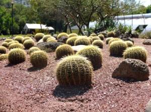 jardin-botanico-chapultepec-ciudad-mexico-mexico_07
