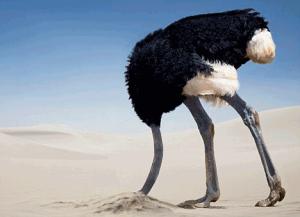 avestruz1