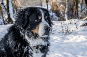 Trucos-para-que-tu-perro-no-pase-frío-durante-los-meses-de-invierno