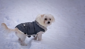 cuidados-de-los-perros-en-invierno