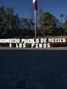 LOS PINOS (1)