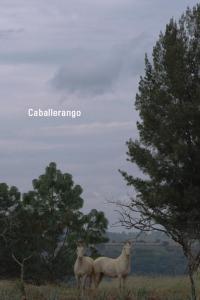 caballerango-983567628-large